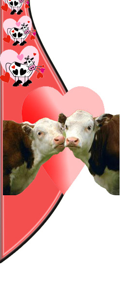 cow valentines day gifts